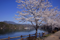 Tree With White Flower Side On River 4k Wallpaper