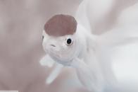 Cute white fish