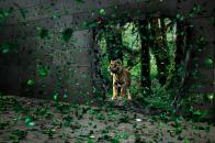 Tiger Desktop 8K Wallpaper