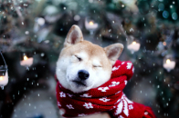 Cute dog winter snow snowflakes nature 2560x1600