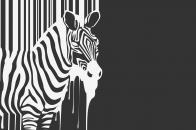 Zebra melting