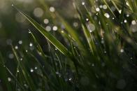 Grass bokeh macro