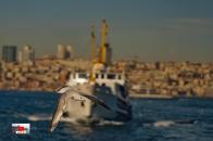 Bird Flying on Sea 8k Wallpaper