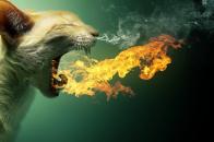 Flaming cat