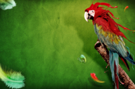 Parrot creative