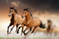 Two, horses, running