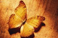 Butterfly 4k Wallpaper
