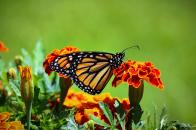Butterfly sit on flower