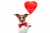 Dog says happy valentine