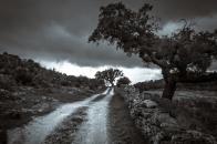 Cork, oak, trees, along, road