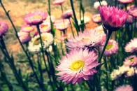 Cute Pink Flower Download and Setup Your Screen Saver