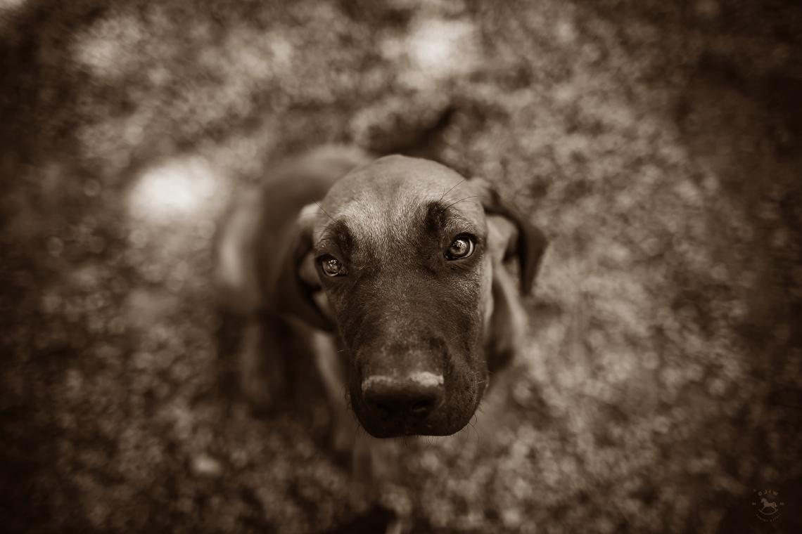 National pet day adopt a dog photo