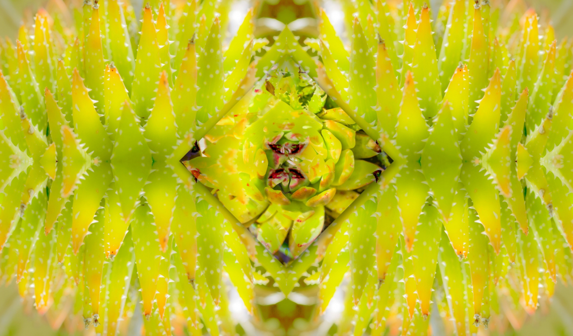 Succulent symmetry art