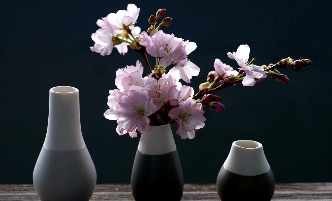Cherry blossoms vase background