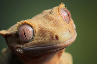 Gecko HD Wallpaper 1920x1080