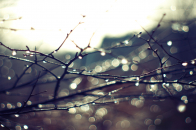 Wet twigs nature wallpaper