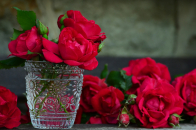 Fresh, red, roses, in, a, vase