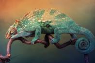 Chameleon 2019