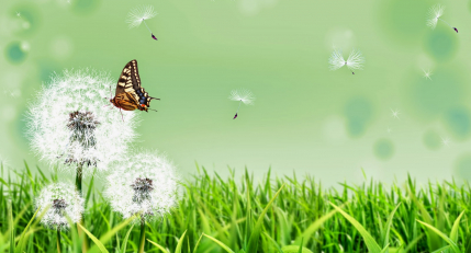 4k butterfly on flower