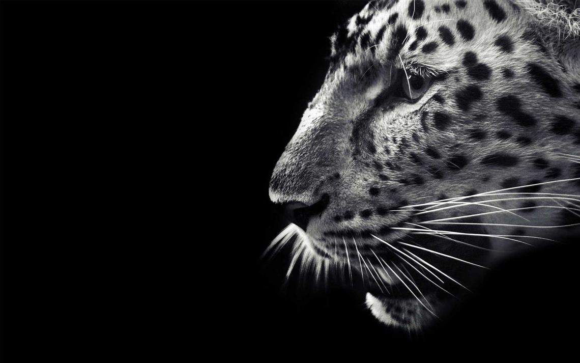 Free Photo Of Black Jaguar Widescreen Wallpaper Me Pixels