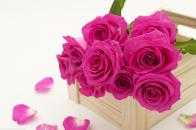 Fresh roses flowers