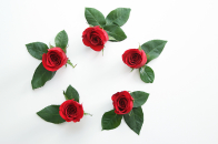 Beautiful red roses flowers circle