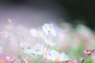1920x1080 cute white spring flower Nature desktop backgrounds wallpaper