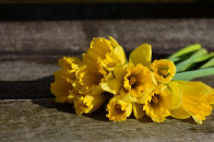 Daffodil bouquet rustic background