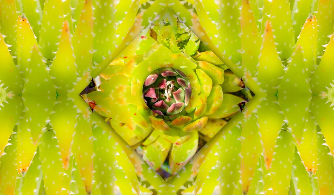 Succulent symmetry v2