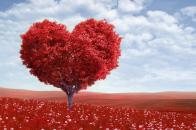 Valentines, day, 2020