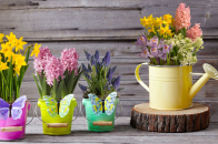 Spring, flowers, collection