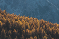 Forest mountains trees tops coniferous 4k we