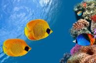 Desktop, aquarium