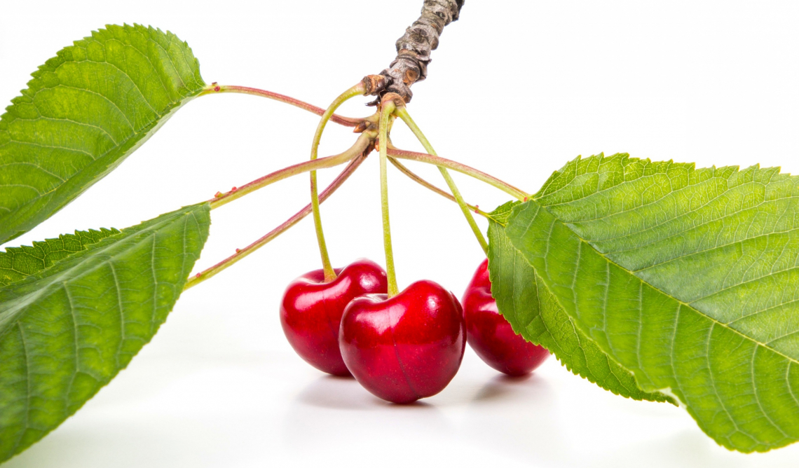 Sweet red cherries branch