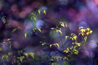Plant twigs bokeh