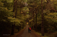 Couple Walk on Forest Sand Road Wallpaper