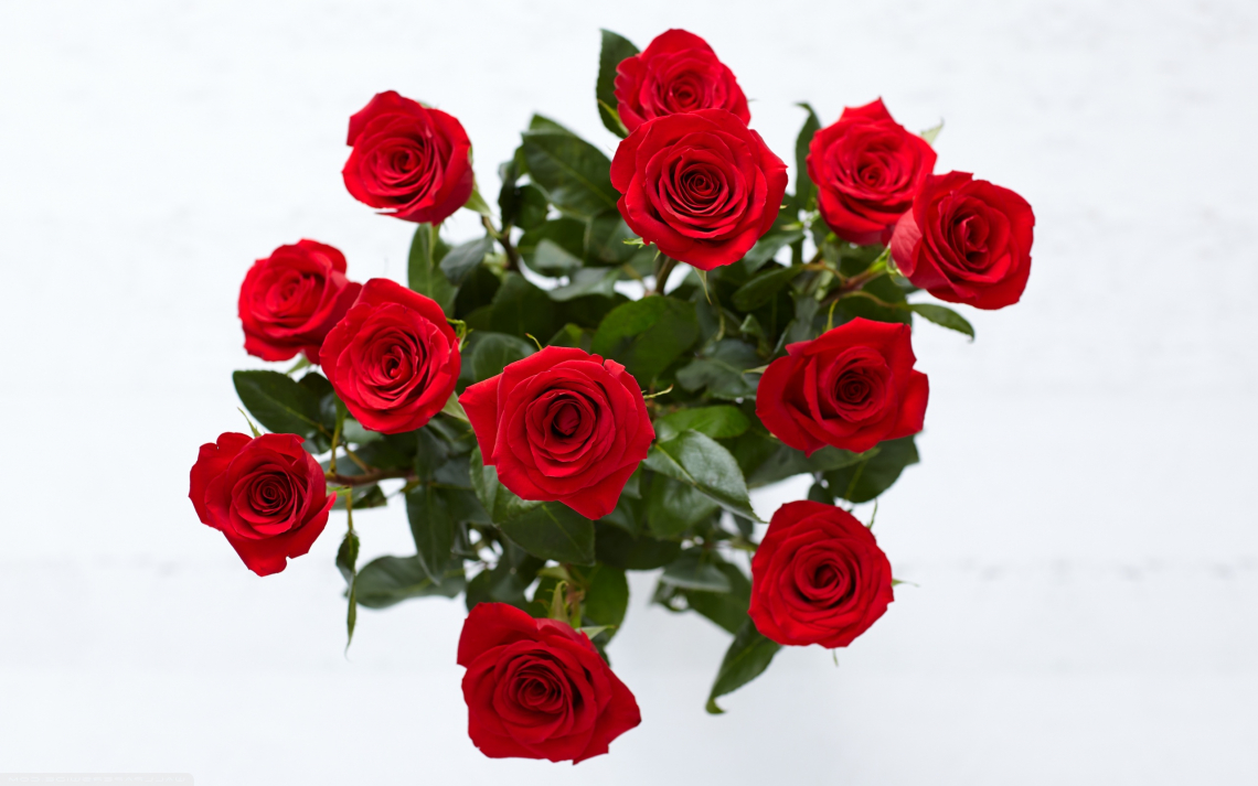 Red roses for home decorate