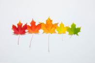Fall gradient