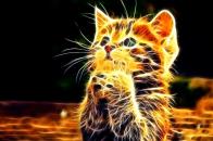 Abstract 3d little cat n fire wallpaper