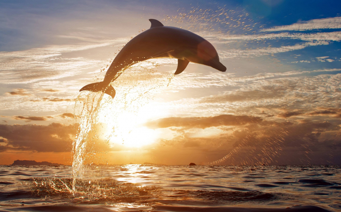 Sunset pic with Dolphin jumping