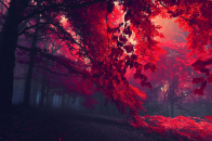 Red Forest Trees