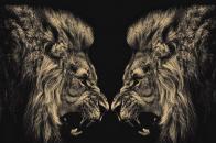 Both Tiger Fighting Mood 8k Wallpaper For Desktop Background