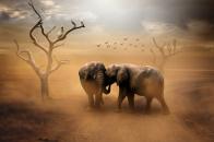 Two elephants wild animals dust