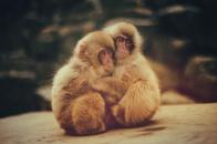 Baby, snow, monkeys
