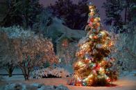 Christmas, at, night,