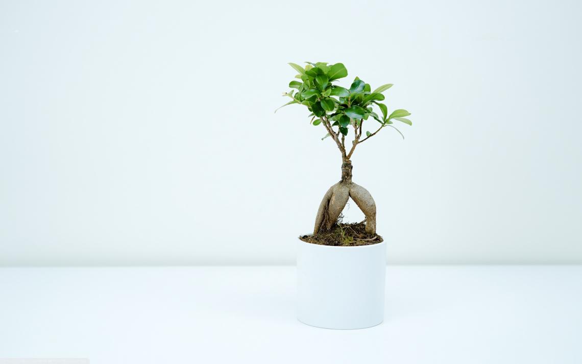 Free photo of Bonsai plant indoor - Me Pixels
