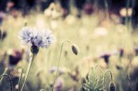 Spring Beautiful Flower HD Wallpaper