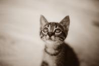National cat pet day 2021 april