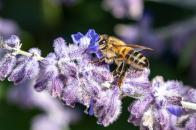 Insects juice sucking on purple flower image of 4k desktop wallpaper
