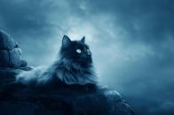 Horror Cat 8K Wallpaper